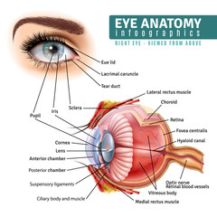 Realistic Eye Anatomy Infographics