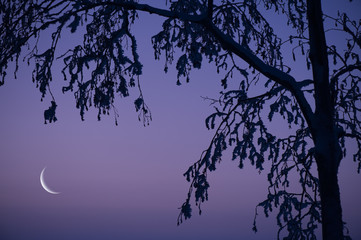 Photo sur Toile Oiseaux sur arbre Snow and frost covered tree branches. Crescent Moon on twilight sky.
