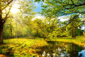 Landscape with Pond in springtime with bright sun shining through the trees