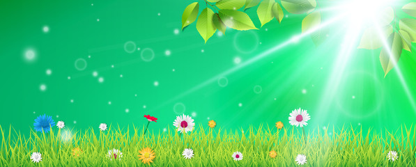 Hello spring. Spring Background. Spring design background with abstract beautiful colorful flower. Vector illustration. Spring Grass Beech Twigs Daisy Flowers Header.