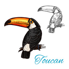 Toucan tropical bird sitting on branch sketch