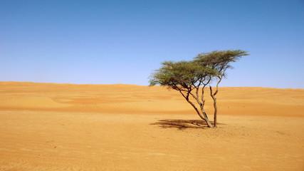Wüste, Sommer, Urlaub