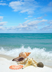 Seashells on a White Sand Beach as the Waves Splash In