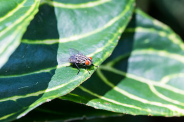 Fly perching on green leaf