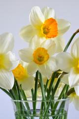 Photo sur Aluminium Daffodils in a Vase