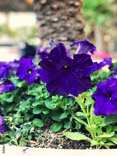 Purple Flowers Stock Photo And Royalty Free Images On Fotolia