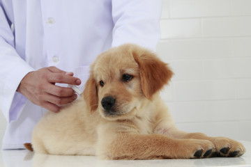 veterinary check puppy