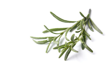 rosemary herb closeup on white background
