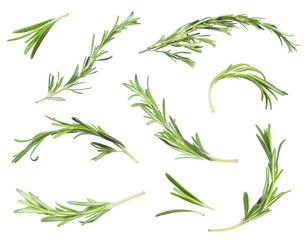 Set of rosemary stems isolated on white background