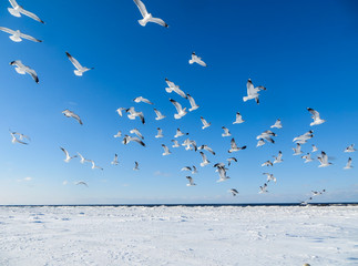 Seagulls on the shore of the frozen Gulf of Riga in the winter of 2018.