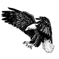 Black and white eagle hand drawn