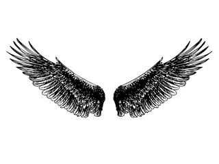 doodle hand drawn of angel wings