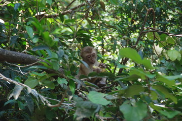 A little monkey looking at camera through leaves