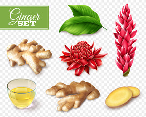 Ginger Transparent Background Set