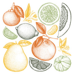 Vintage collection of ink hand drawn fruits. Vector drawings isolated on white background. Sketched citrus illustrations. Highly detailed exotic plants outlines.