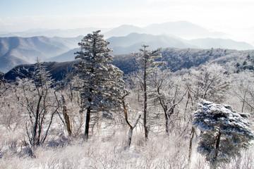 눈 내린 겨울산의 찬라함