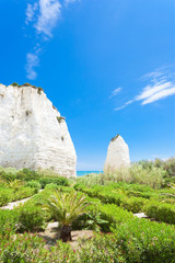 Vieste, Italy - Vegetation at the chalk rocks of Vieste