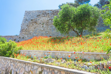 Vieste, Italy - Poppy field at the historic fortress of Vieste