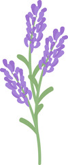 The illustration of lavender