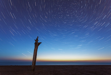 Blue evening sky and startrails over sea and lonely tree