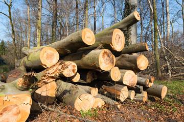 Nach Sturmschaden gefällte und zum Abtransport vorbereitete Baumstämme