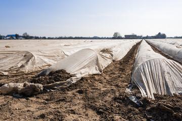 Feld mit Folien abgedeckten Spargelbalken