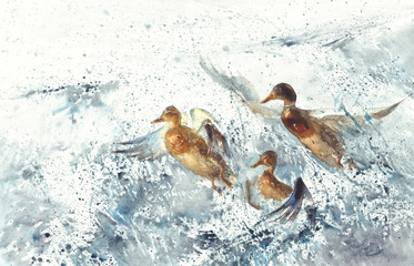 three ducks in the sea splatter watercolor background
