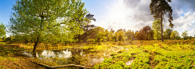 Fototapete - Landscape Panorama with Pond in springtime with bright sun shining through the trees