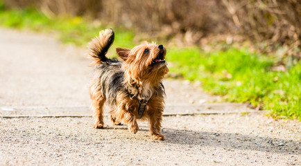 Cute little dog on forest path for walk