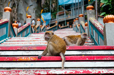 couple of young monkeys otside sacred batu caves temple stairs during cloudy day