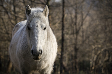White horse standing at forest