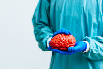 surgeon holding a brain.Anatomy human brain model.