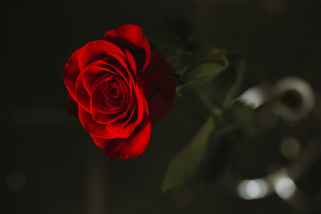 High angle view of red rose blooming outdoors at night