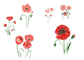 Watercolor poppies. Flower set, a collection of poppies of different types and species. Hand-drawn illustration