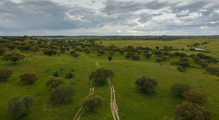Aerial view from cork trees in a field