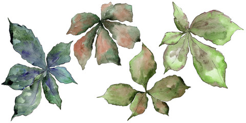 Chestnut leaves in a watercolor style isolated. Aquarelle leaf for background, texture, wrapper pattern, frame or border.
