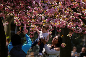 People photograph a child with Cherry Blossoms on one of the first warm days of spring in Washington Square Park in New York
