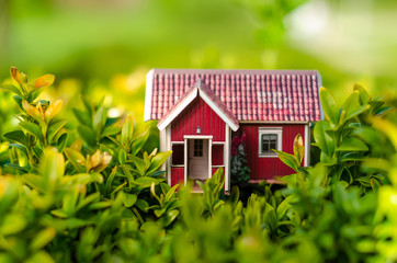 Small house sun leaves plant green nature