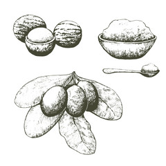 Shea nuts and butter set. Hand drawn illustration