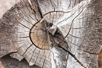 wood rings texture, cracked wooden cut