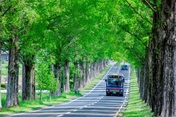 新緑の並木道を走るバス