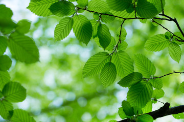 green leaves on the tree
