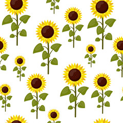 Seamless pattern sunflowers cartoon isolated on a white background. Summer agriculture flat style vector illustration