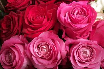 赤とピンクのバラのフラワーアレンジメント - Red and pink roses in flower arrangement