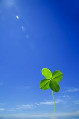 青空を背景に立つ四つ葉のクローバー1つ