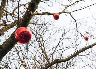 bottom view of red christmas balls on bare tree