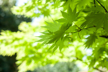 green leaves against sky background