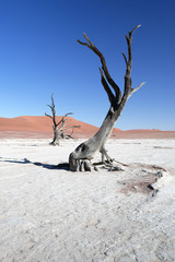 Abgestorbene Akazienbäume, Deadvlei (Namibia)