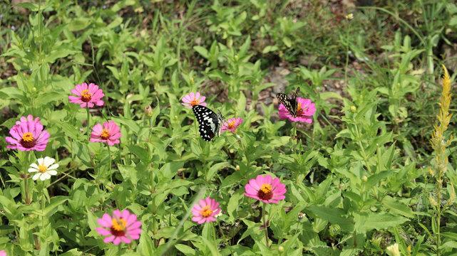 Bunter Schmetterling auf einer Blumenwiese