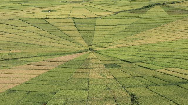 Lingko-Felder, Reisfelder in Form eines Spinnennetzes